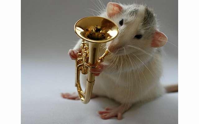 Крысы-артисты в фотоработах Эллен ван Дилен