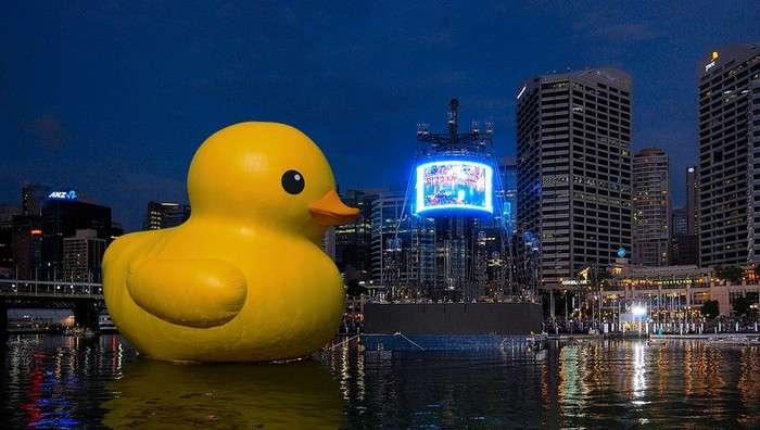 Гигантская желтая утка в Сиднейской гавани