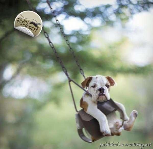 Забавные собаки Рона Шмидта