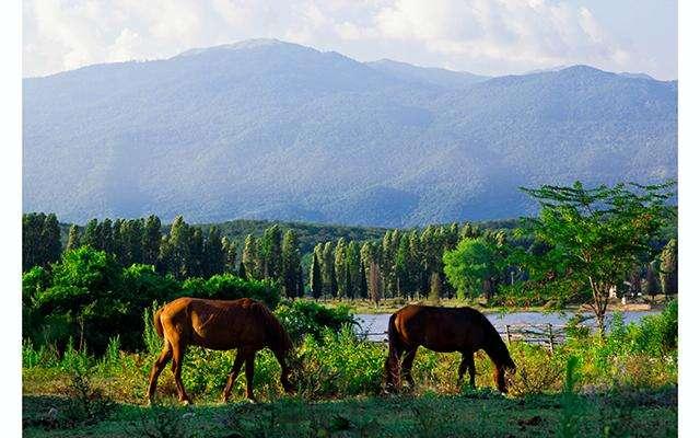 Фауна Абхазии