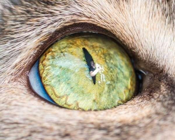 Магнетический кошачий взгляд