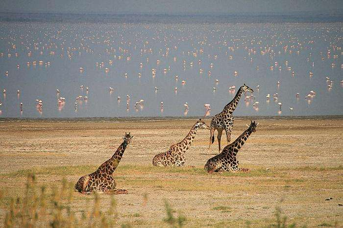 Удивительная Танзания