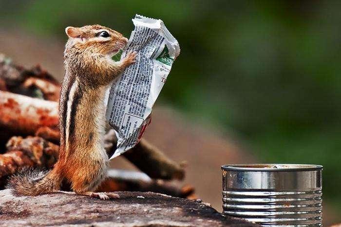 Милые, смешные, неловкие, веселые фотографии животных