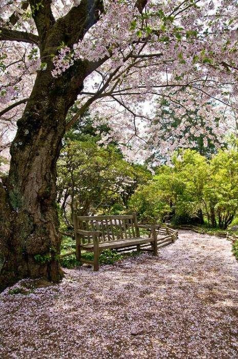 Красота весны