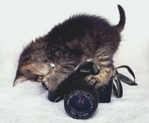 Фотографии животных, которые заставляют улыбнуться