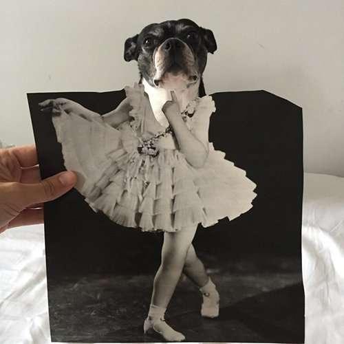 Коллажи с собаками от Джей Риггио