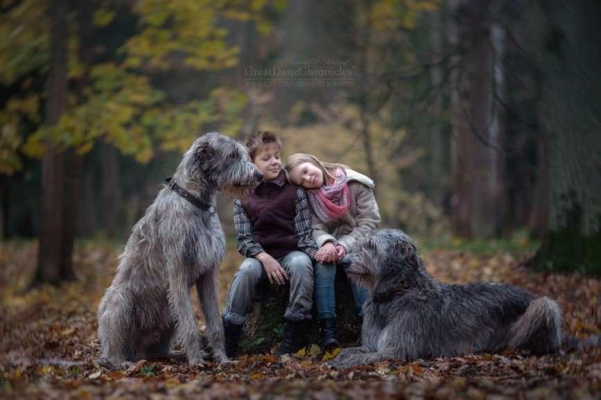 «Маленькие дети и их большие собаки» Энди Селиверстова