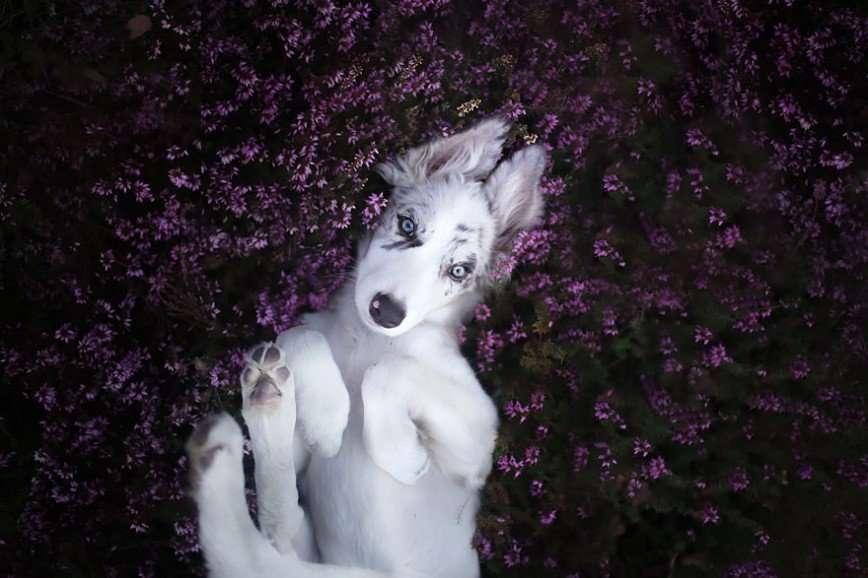 Фотографии собак Алисии Змысловской