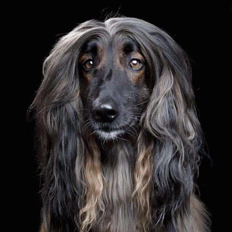 Характер животных в портретах Robert Bahou