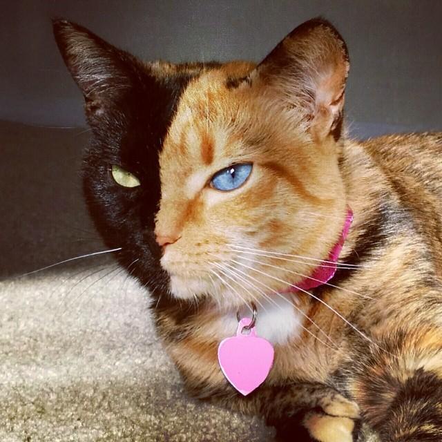 Венера с разноцветными глазами