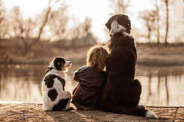Мальчик и три собаки