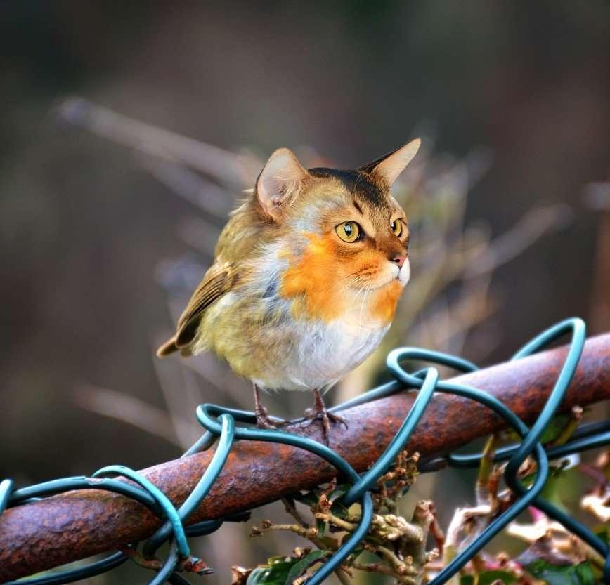 Животный мир Сары Деремер