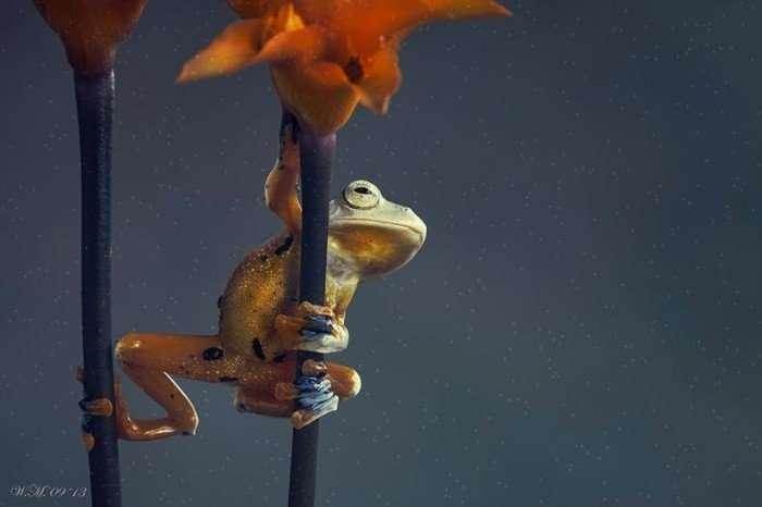 Очаровательные лягушки в объективе Вил Мийер
