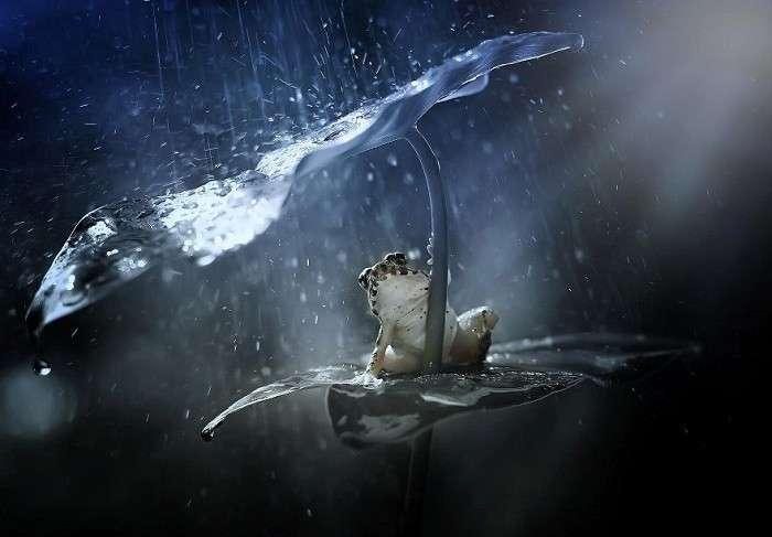 У животных есть свои зонтики